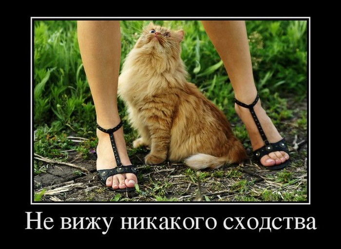 Подборка прикольных демотиваторов №1196