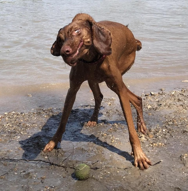 """Когда твой пес """"сломался"""""""