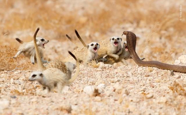 Лучшие фото конкурса дикой природы Wildlife Photographer of the Year