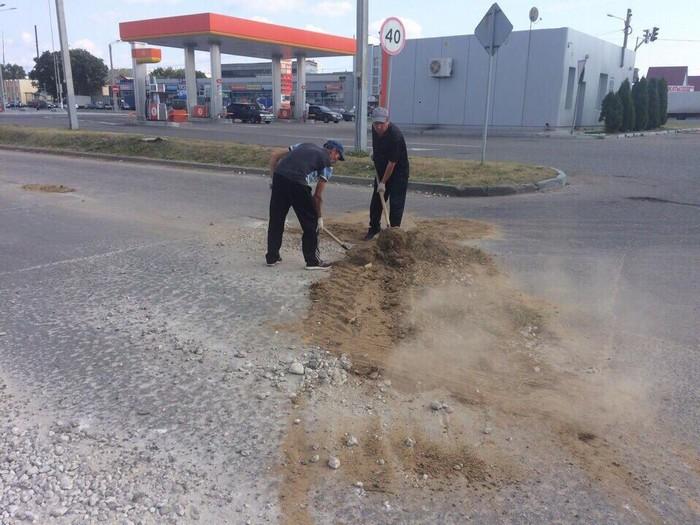 Дендрофекальная инженерия во время ремонта дорог