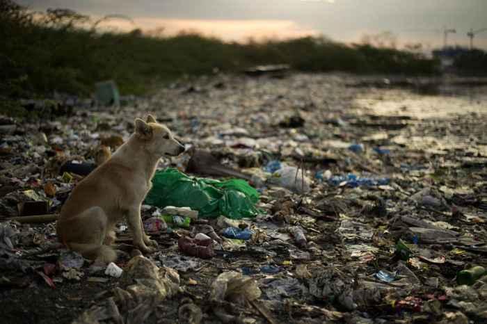 Пластмассовый мир победил?