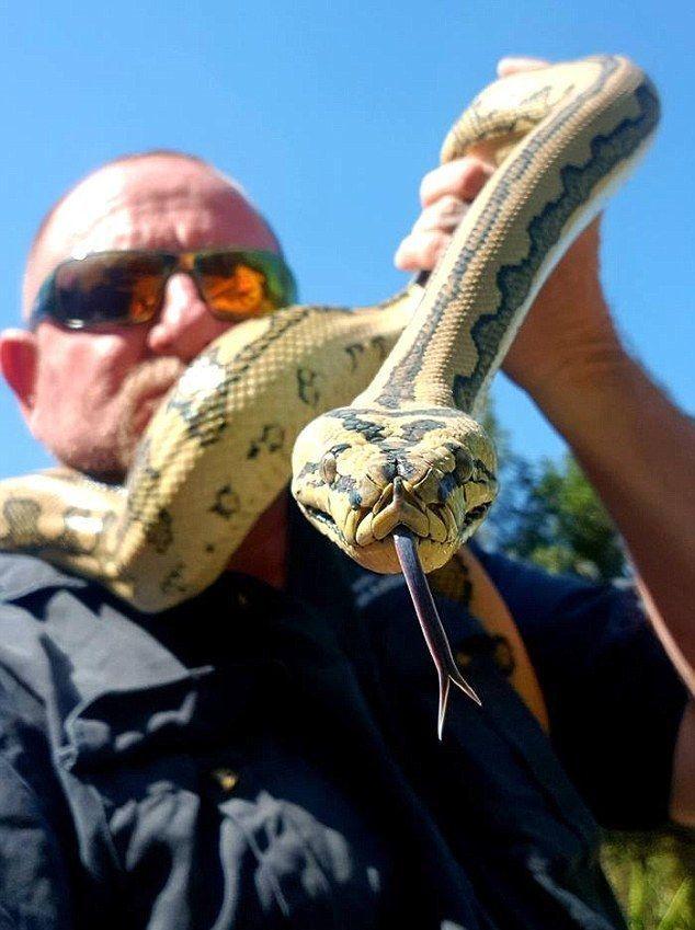 В Австралии ядовитые змеи атакуют дома: на их счету уже трое убитых