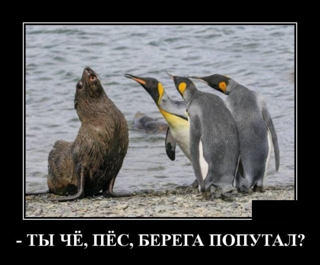 Подборка прикольных демотиваторов №1206