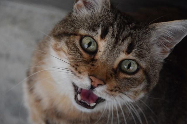 Кот принес добычу своему хозяину