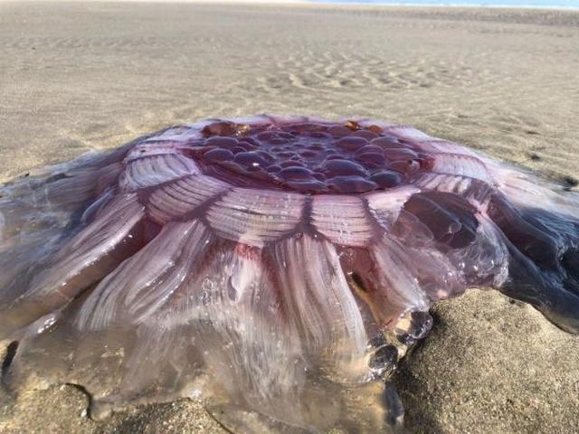Жители Новой Зеландии обнаружили необычное существо на пляже