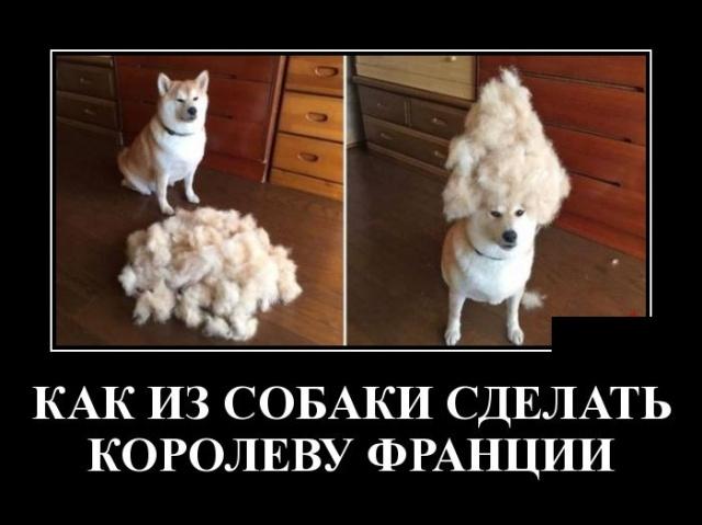 Подборка прикольных демотиваторов №1208