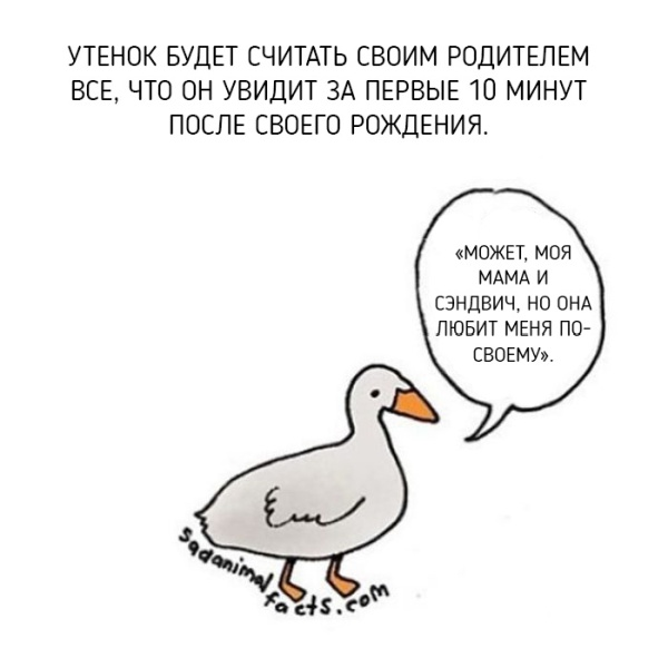 Интересные факты о животных в рисунках