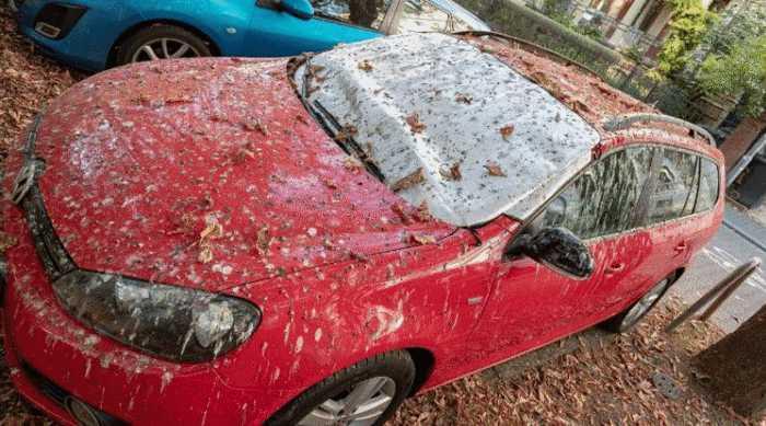 Птицы напали на парковки немецкого Висбадена