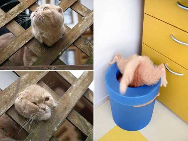 Моменты, о которых стыдно вспоминать любой кошке