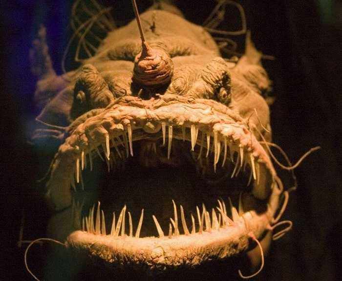 Глубоководный удильщик, или морской черт