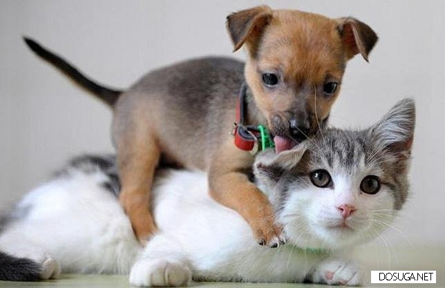 Парни, вам больше нравятся котики или собачки?